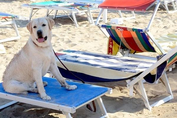 Hotel Pet Friendly Lido Di Savio, Albergo con animali ammessi Vacanze con cani di piccola